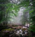 Едно време...в една гора... ; comments:48