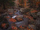 Когато Есента рисува ; comments:88
