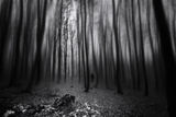 Dark forest ; comments:8