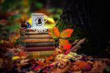 """""""..... За да разкажеш себе си на някого, са нужни вкуса на тъмното кафе, истории, казващи спомени, цветовете на есента и неоновото вълшебство на гората!"""" ; comments:7"""