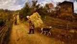 Живот в Родопите ; comments:24