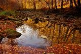 златна есен ; Comments:15