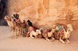 Бедуини ; Comments:6