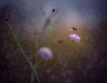 Танцуващата пчела ; Comments:5