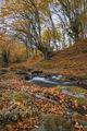 Есенно тайнство ; Comments:8