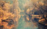 Есенни цветове ; comments:18