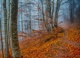 Есен в гората ; comments:5