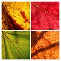 Есенни етюди II ; Comments:8