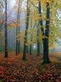 Есен... ; comments:23