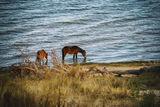 Млади кончета пият вода ; Comments:24