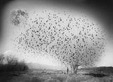 Мечта с птици и луна ; comments:10