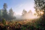 туманное утро сентября ; comments:6