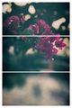 """""""вчерашни цветя..."""" ; comments:27"""