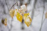 Зимно,........ ! ; comments:26