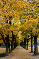уча се да заобичам есента ; Comments:7