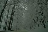 В Петрохан снежна красота .......и страшна ; comments:9