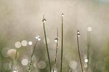 Пролетна Роса ; Comments:10