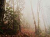Есенно перде ; comments:4