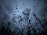 Птиците ; comments:22