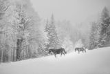 Зима в Балкана ; comments:9