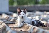 Котка върху ламаринен покрив ; comments:3