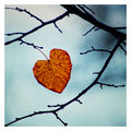 От есента ми остана само... ти ; Comments:14