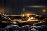 Златен сън ; comments:6