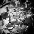 Flying flowers / Летящи цветя ; comments:7