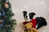 Честита Коледа от мен и Мисти :) ; comments:3