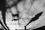 котката на сянката ; comments:19
