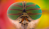Horsefly ; Comments:4