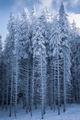 Гората и зимата ; Comments:2
