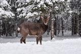 в зимнем лесу ; comments:8