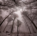 Следвай мъглата на утрото ;) ; comments:14