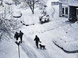 Зима ; comments:23