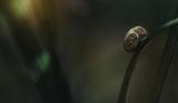 snail! ; comments:3