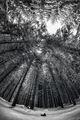 Зимна гора ; comments:9