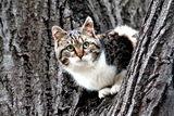 Коте на дърво ; comments:10