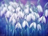 Сънувам пролет... ; comments:18