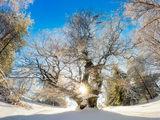 Дървото на живота ; Comments:10