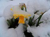Под снега ; comments:13