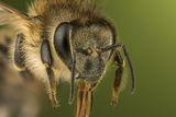 Пчеличка ; Comments:4