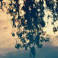 Водни отражения / Water reflections ; comments:10