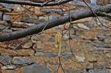 Усещане за пролет... ; comments:4