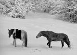 Черно и бяло ; comments:18