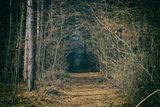 Тайната пътека ; comments:3