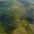 Приятелски Воден Дух / Friendly Water Spirit ; comments:7