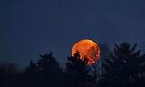 Залезът на горската  Супер Луна ; comments:24