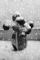 Зимата се завърна ; comments:25