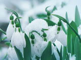 Снежно... ; Comments:16